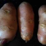 01 Крошка-картошка. Подбор материала